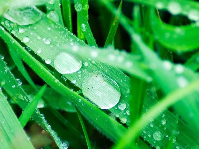 Giải thích sự tạo thành giọt nước đọng trên lá cây vào ban đêm