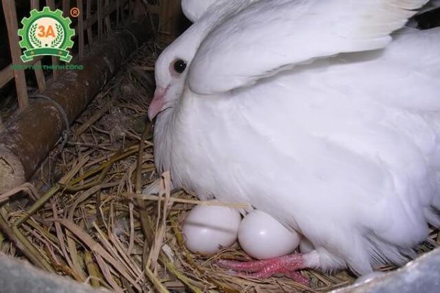 nêu ưu điểm của sự thai sinh so với sự đẻ trứng và noãn thai sinh