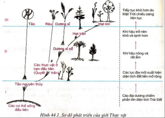 so sánh cơ quan sinh dưỡng của cây rêu và cây dương xỉ cây nào có cấu tạo phức tạp hơn